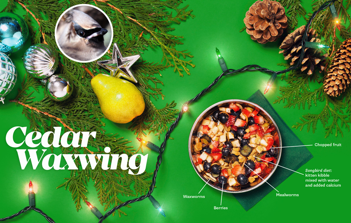 The Toronto Wildlife Centre Holiday Campaign
