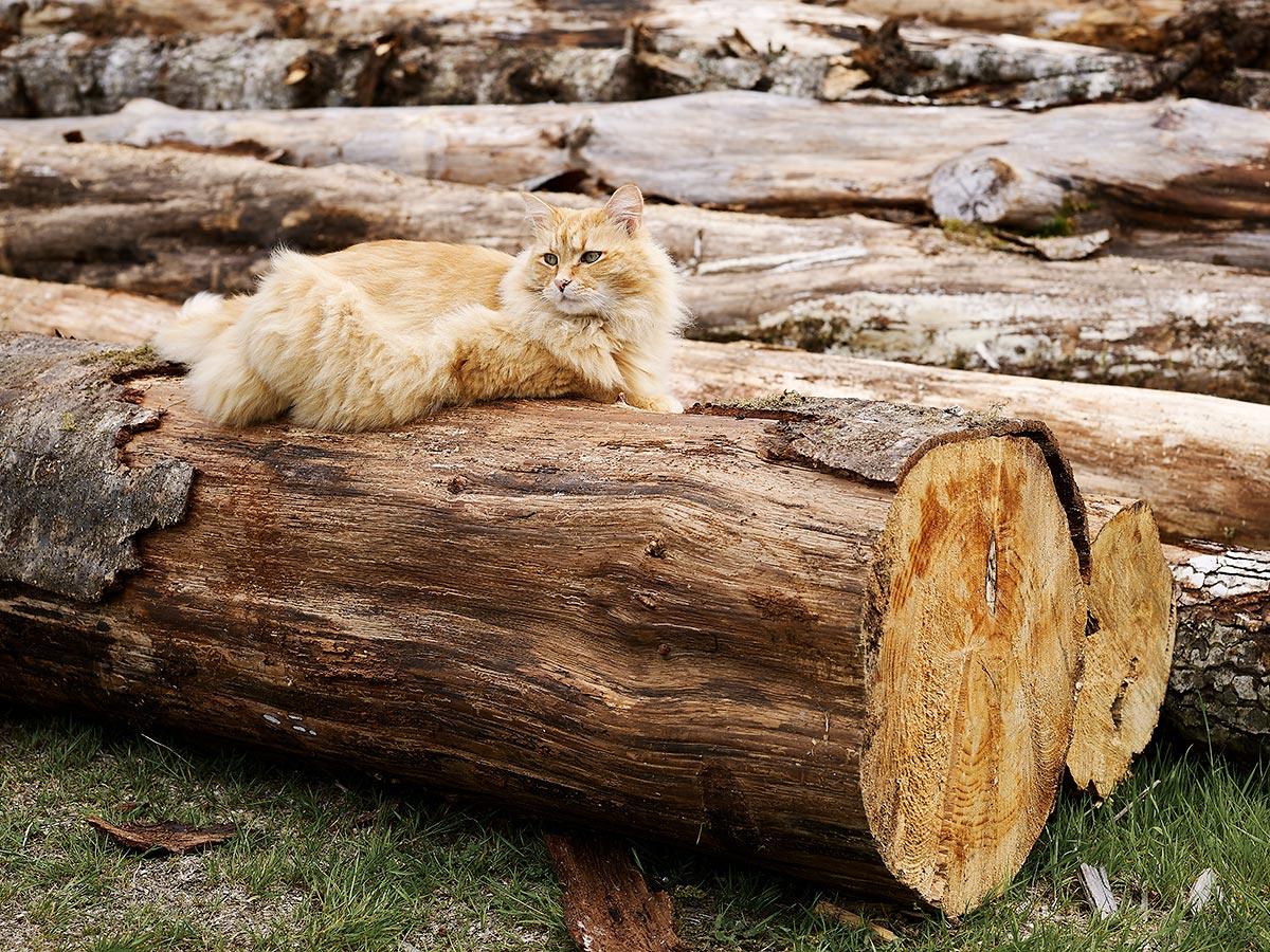 Betty Carlson's cat in Sointula, British Columbia