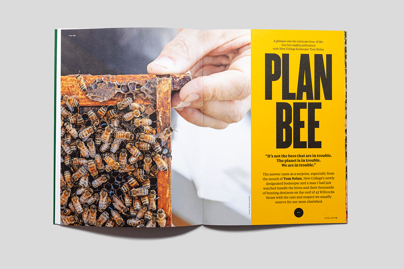Magazine spread showing image of bees and the hand of a beekeeper.