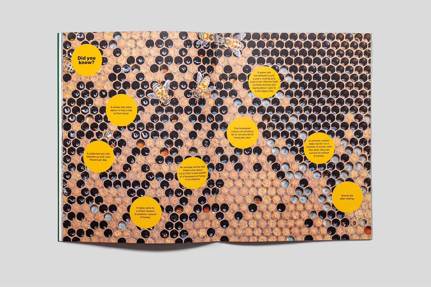 Magazine spread showing close up of bee hive and bees