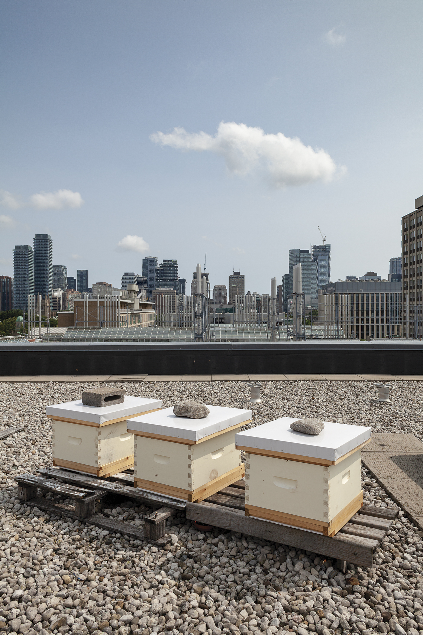 Rooftop Apiary with three hives on rooftop with city skyline in the background.