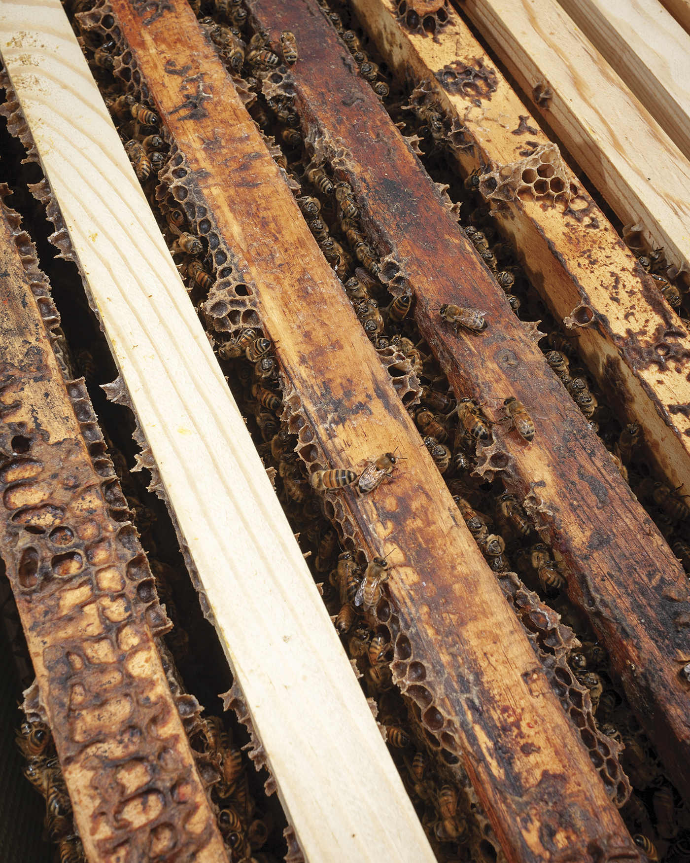 Close up of beehive frames with bees.