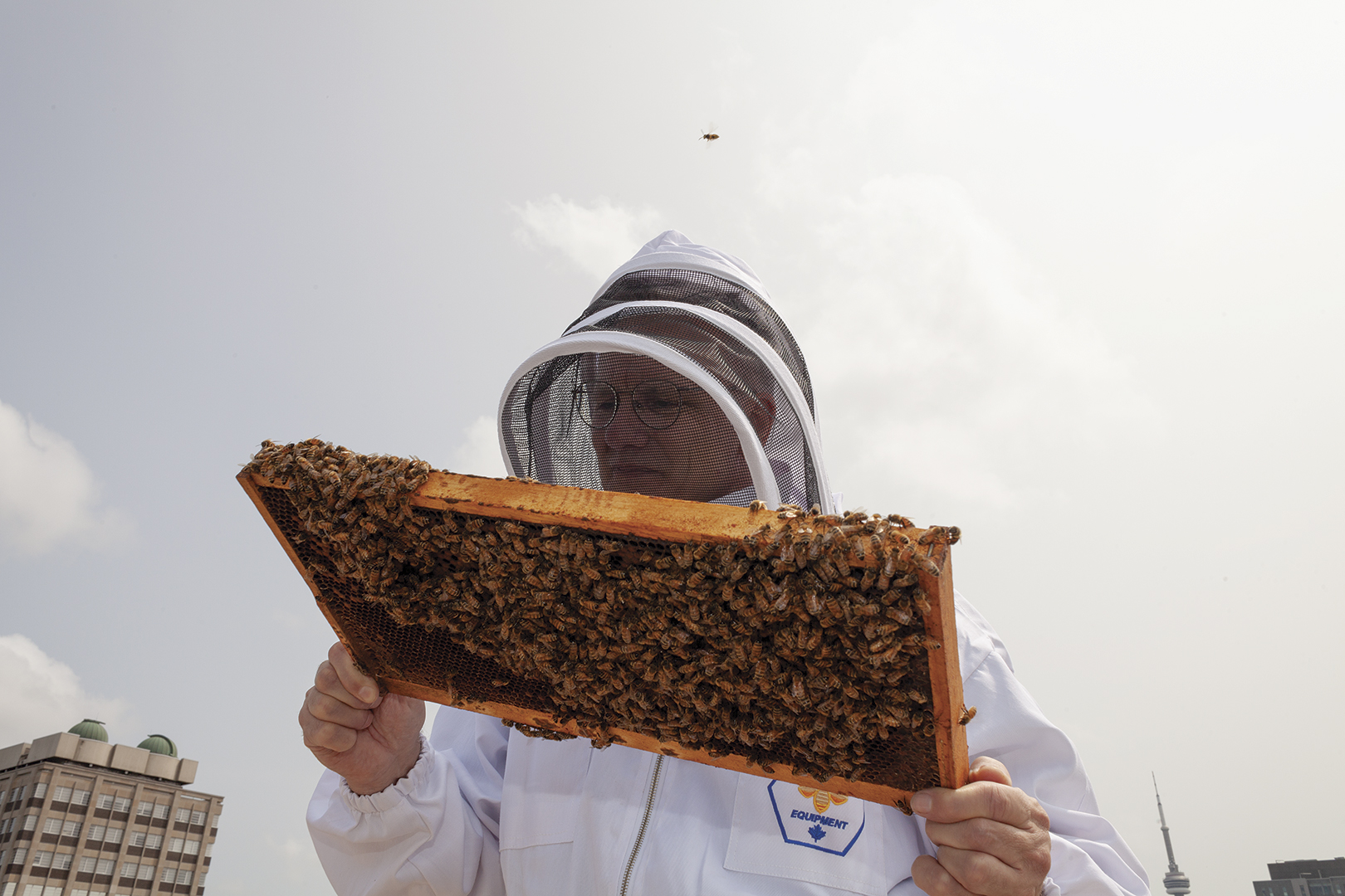 Beekeeper Tom Nolan inspects a frame from a beehive on a rooftop.