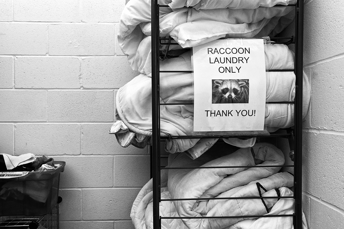 "A shelf of blankets with a sign reading ""Raccoon Laundry Only Thank You"" at the Toronto Wildlife Centre"