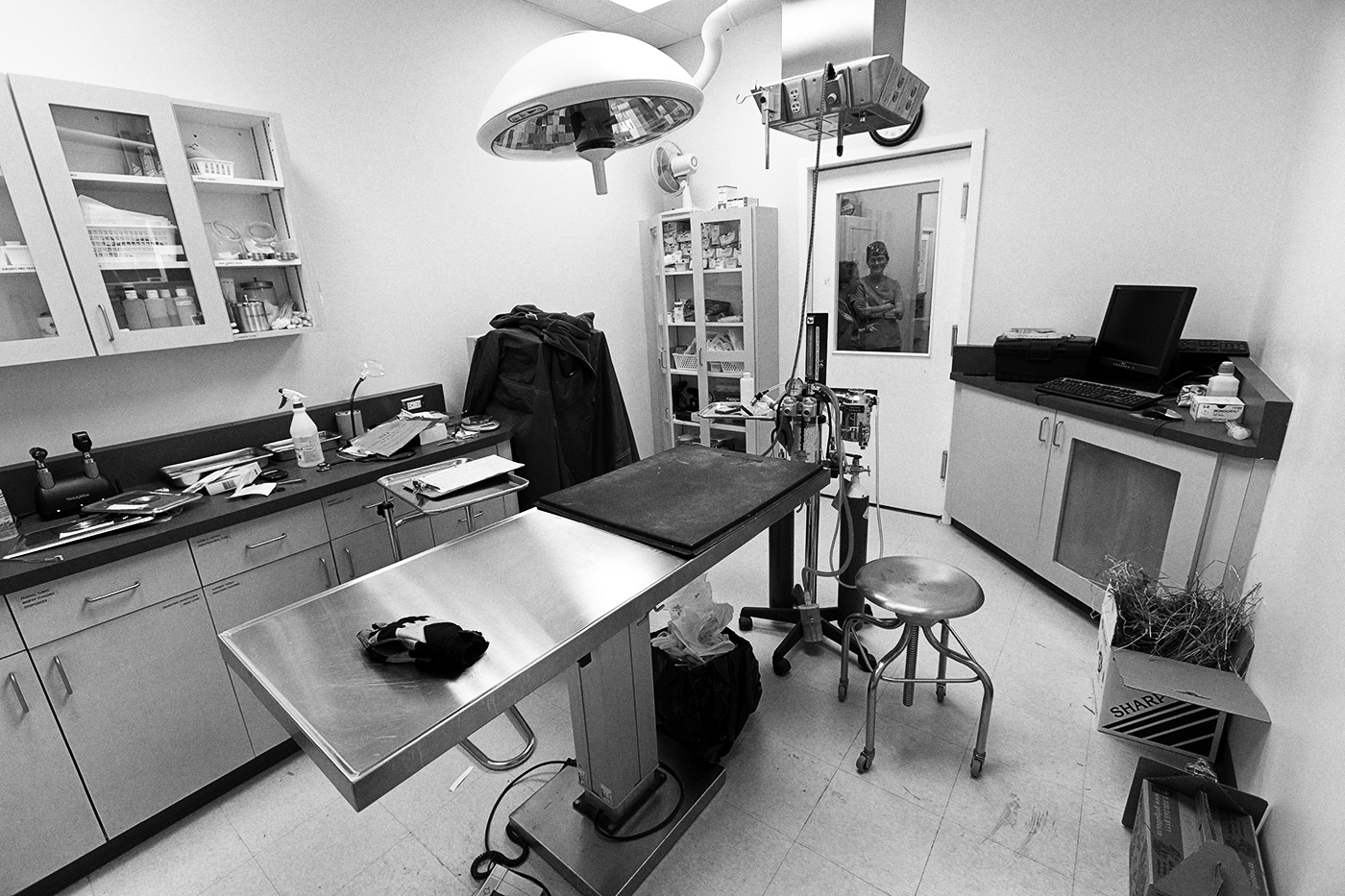 Surgery room at the Toronto Wildlife Centre