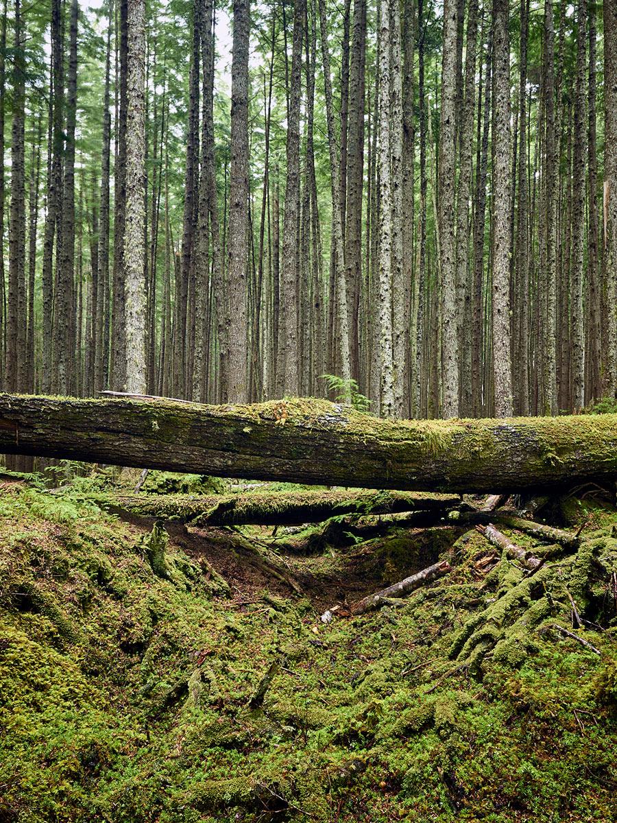 Heritage Trail, Sointula, British Columbia