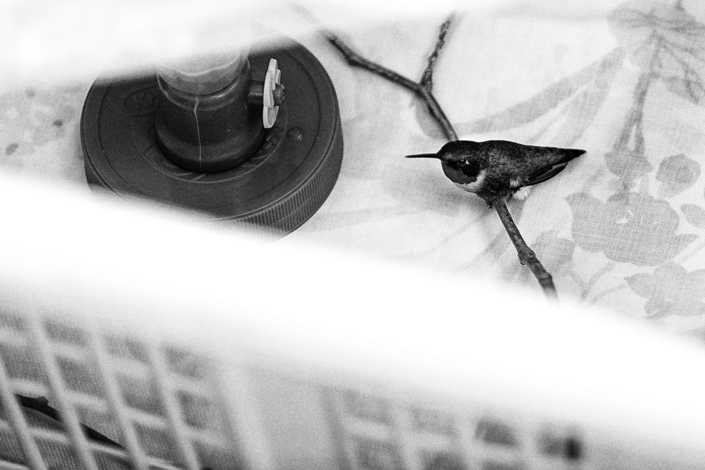 A humming bird in a crate.