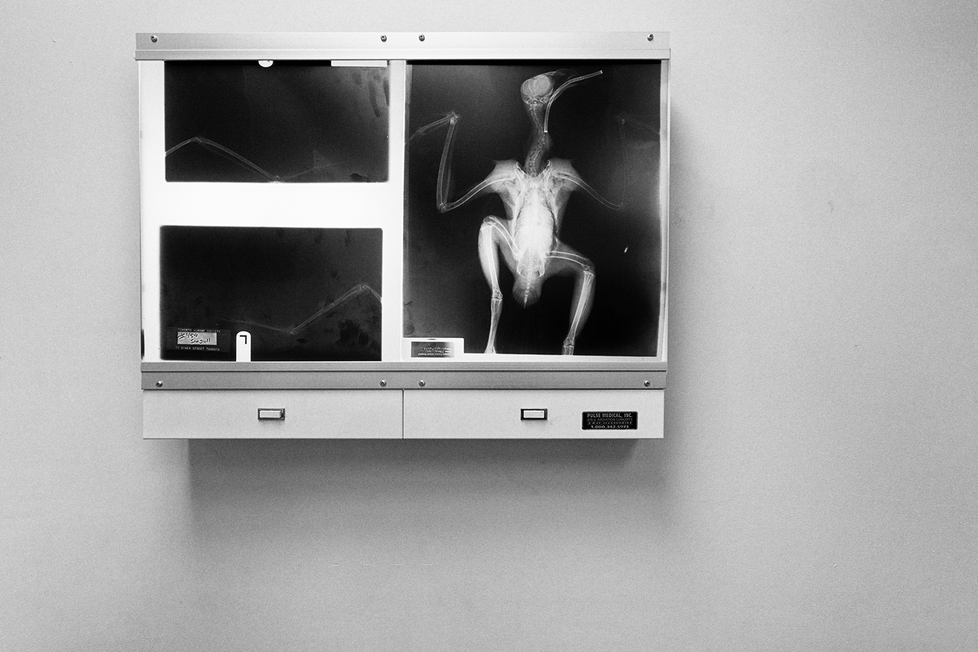 An x-ray of a bird mounted on a lightbox on a wall at the Toronto Wildlife Centre