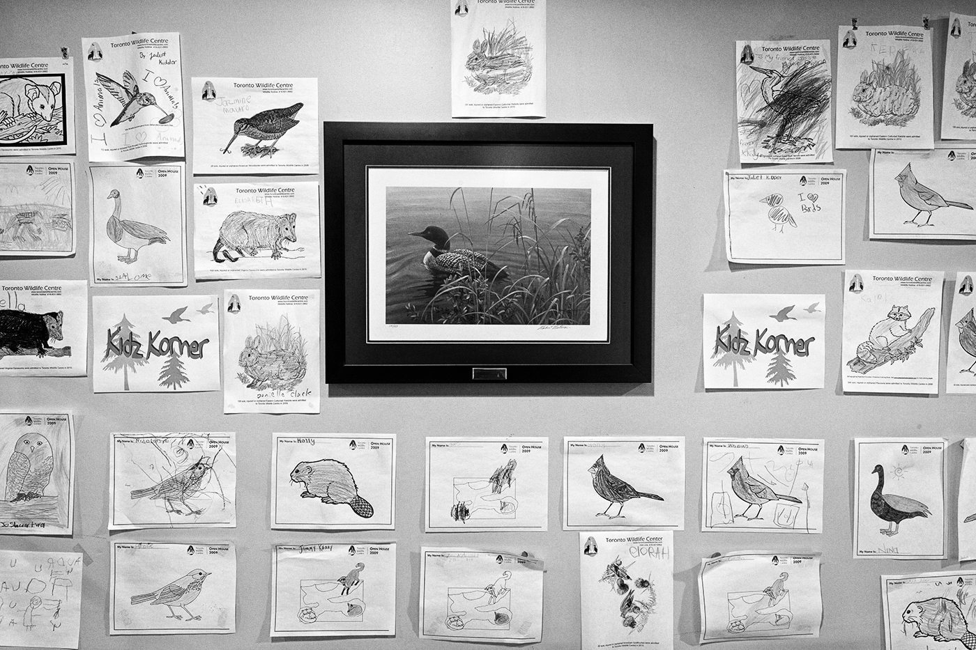 Children's drawings of birds on a wall at the Toronto Wildlife Centre