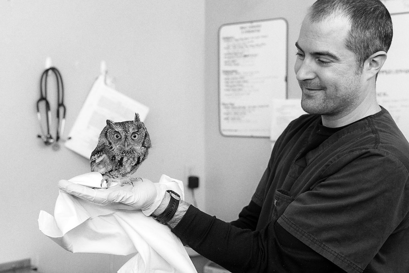 A man holds a small owl at the Toronto Wildlife Centre
